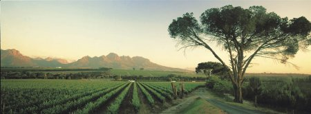 South Africa Wines