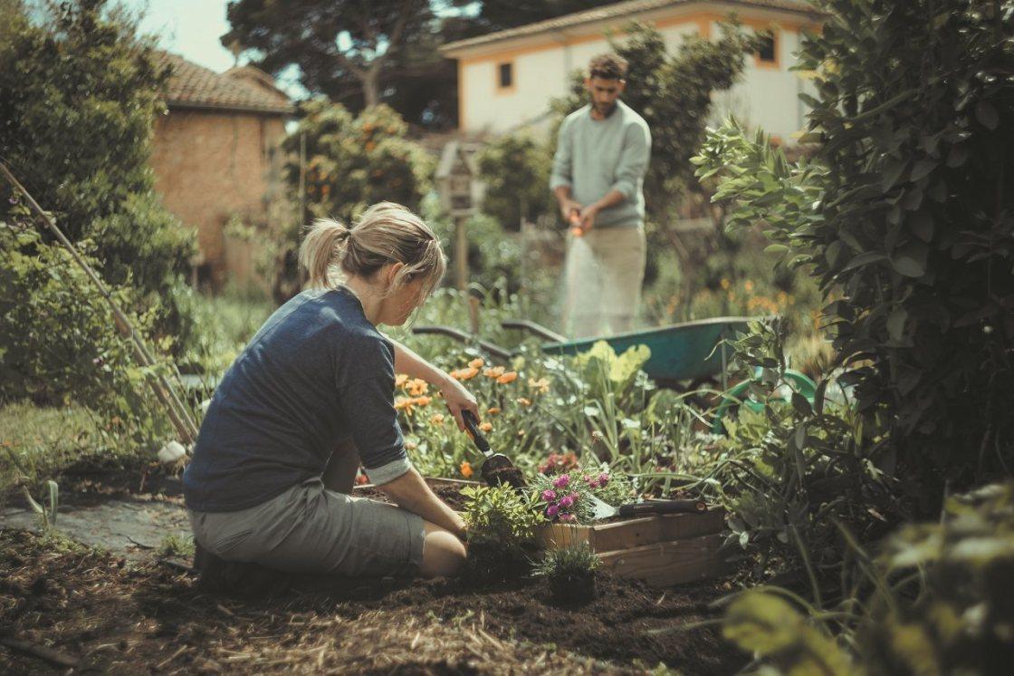 Summer-Gardening