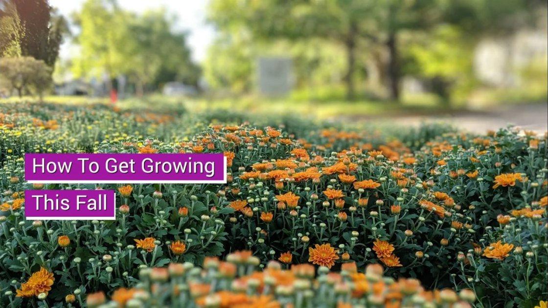 2020-Fall-Gardening